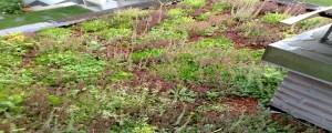 strešni vrt